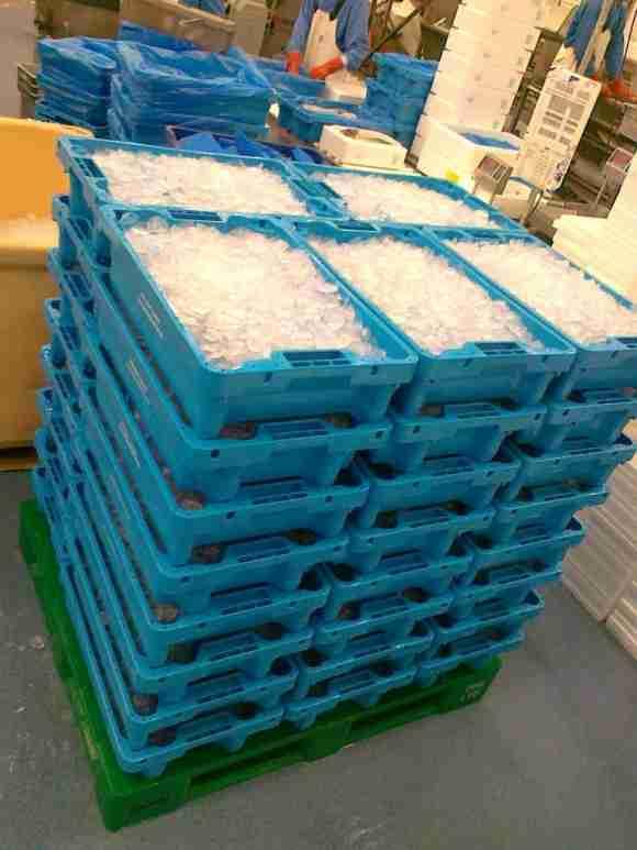 15kg boxes  plastic pallet (2)