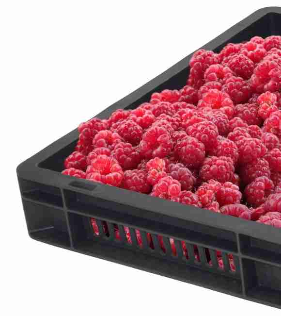 Berry growers love our GoBox 1230 raspberry tray
