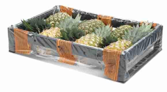 Pineapple 1 e1522818498522