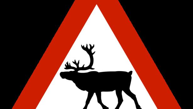 Norwegian elk warning