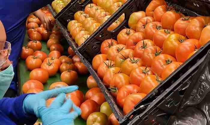IFCO tomato RPC
