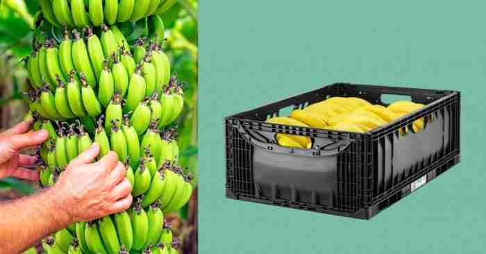 IFCO banana liftlock RPC